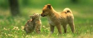 Animal Laws