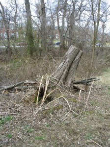 Fallen Tree or Tree Branches